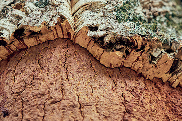 Sustainable materials cork extract
